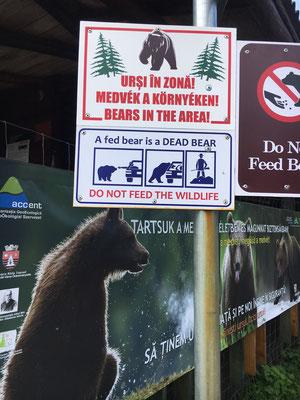 St Anna Lake - Bärengebiet