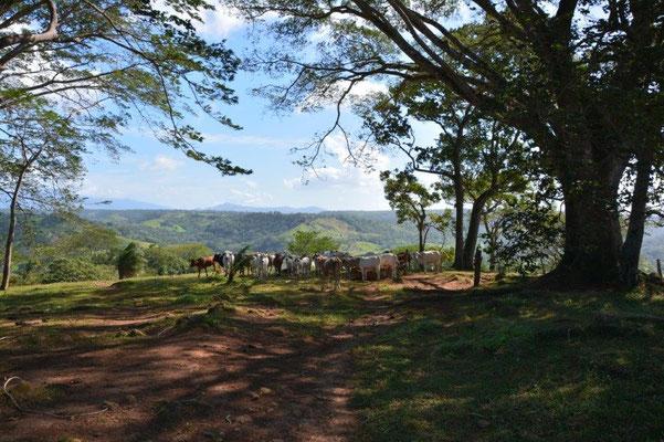 Landschaft im Norden von Costa Rica