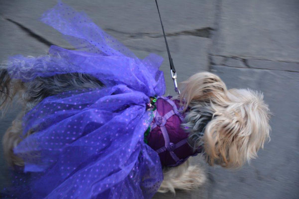 New Orleans - Mardi Gras Hunde Parade