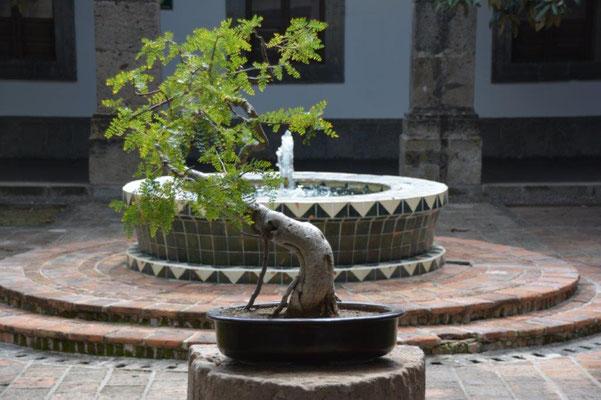 Kulturinstitut in Guadalajara