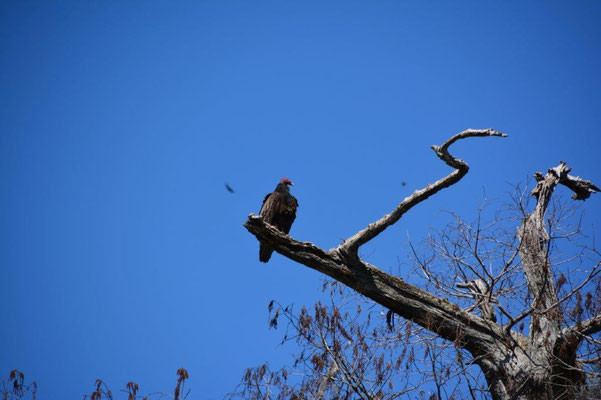 Bootstour im Wakula State Park