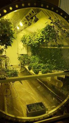 Biosphere 2 - Gewächshaus