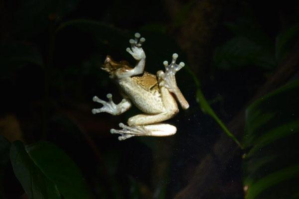 Im Frog Pond