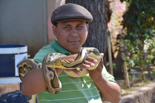 Snake charmerr in Juayua