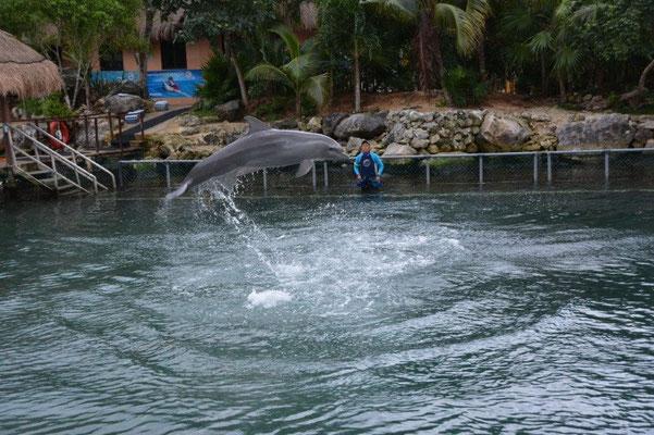 Park Aventura - Delfine