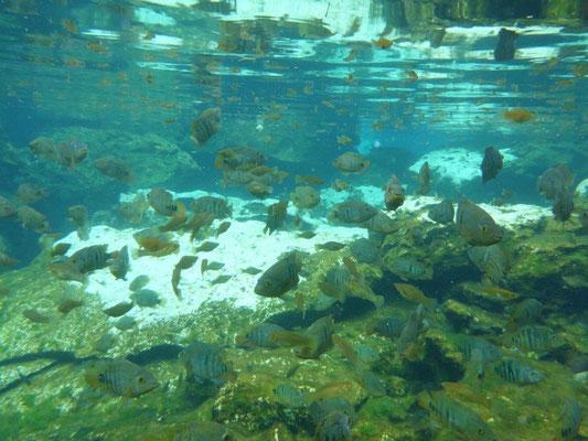 Schwimmen in der Cenote Azul