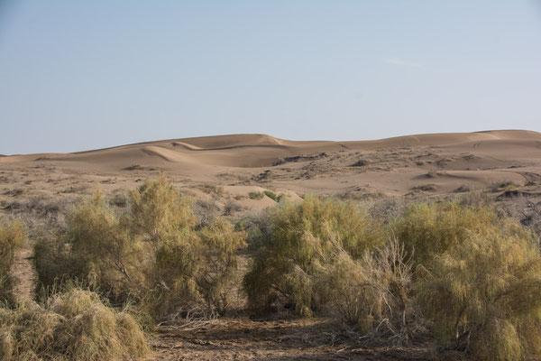 Kavir Wüste