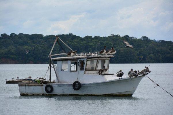 Pelikane haben ein Boot geentert