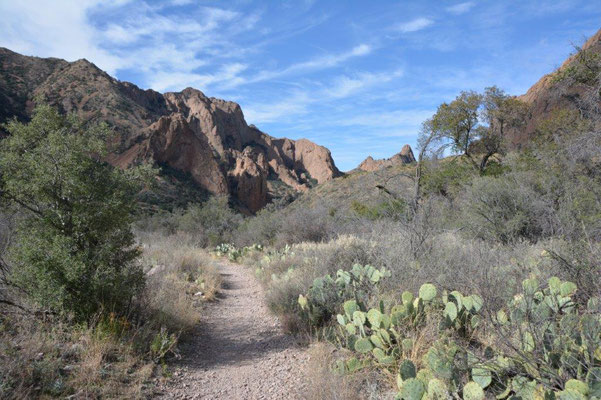 Big Bend National Park - In the mountains on 1500m