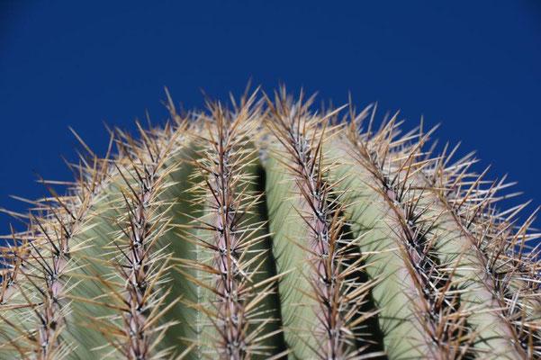 Saguaro NP