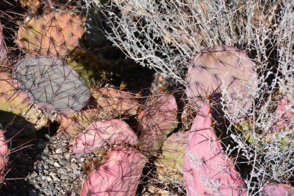 bunter Kaktus