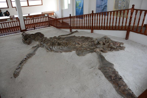 Fossilien Museum