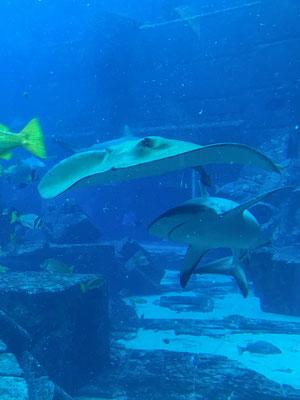 Aquarium im Atlantis the Palm Hotel