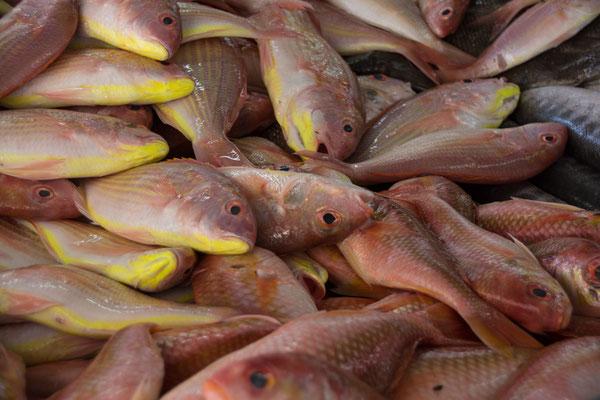 Fish Market in Mutrah