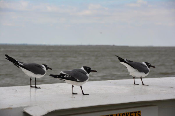On the ferry at Galveston