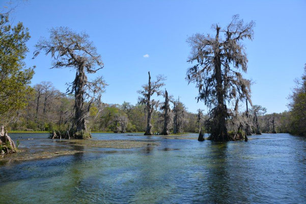 Boat tour at the Wakula State Park