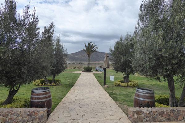 Weingut im Valle de Guadalupe