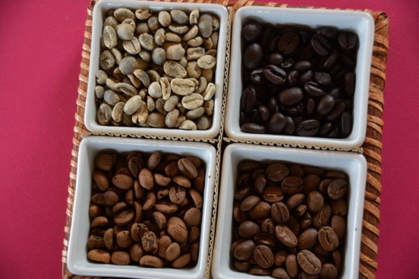 a samll collection of different beans