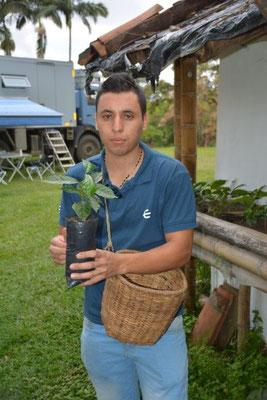 Junge Kaffee Pflanzen