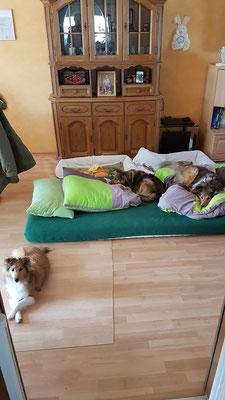 Wir schlafen schon unten im  Wohnzimmer damit Bakira keine Treppen mehr nachts läuft nach oben und nicht alleine ist unten...☺