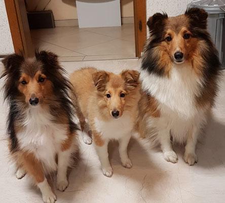 Unser Trio versteht sich gut und wieder geht eine aufregend schöne Welpenzeit zuende🐕🐕🐕🐕🐕🍀allen geht es gut.🍀
