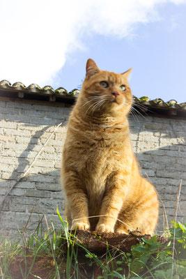 Le chat de Piquecos...