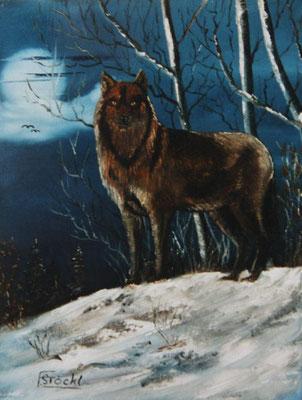 Nr.37 Wolf in einer Winternacht. Format 30x40cm Breitkeilrahmen