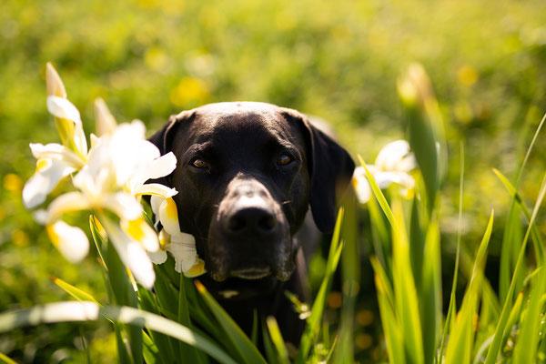 Tipps_Hundefotos_bessere Tierfotos_Hundefotografie