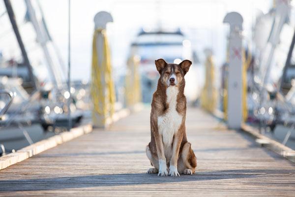 Hunde fotografieren lernen_Fotoworkshop_Tierfotografie_Danemark