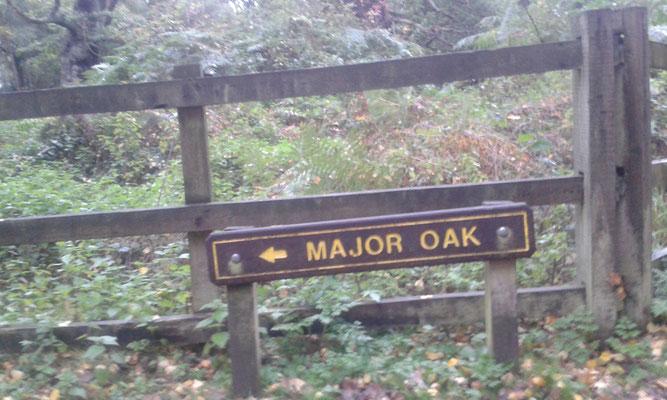 Sherwood Forest_Schottland_England_Die Roadies_Wohnmobil_Hund