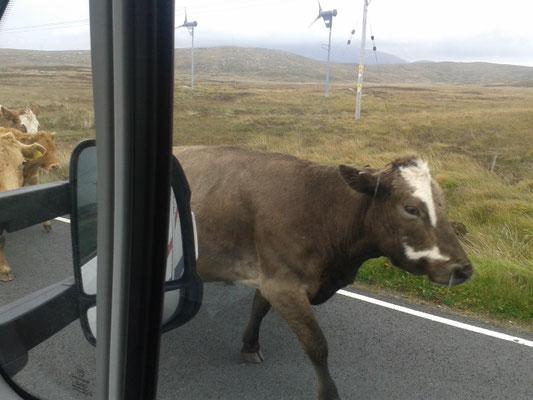 Schottland_Uist_Werkstatt_Reisetagebuch_Reiseblog_Wohnmobil_Die Roadies_Hund