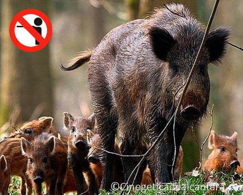 Ne jamais tirer sur les espèces protégèes