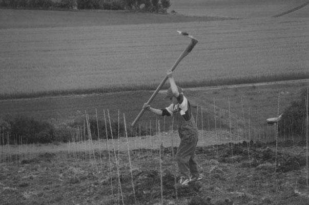 """Thomas Schäfer • beim """"Stickelschlagen"""" im Weinberg"""