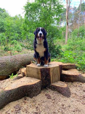 Jetzt habe ich den Baumstamm ergattert