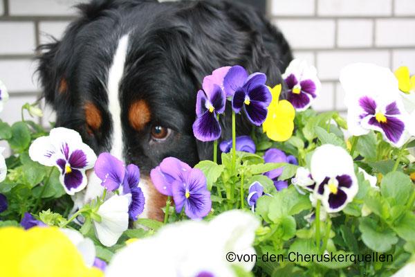 Frauchen ich möchte auch gern eine Blume sein