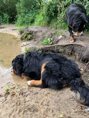Kleine Jungs müssen immer am Wasser rummatschen...🙄