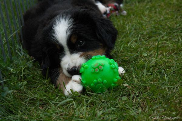 Bijou und ihr Quietsche-Ball :-D