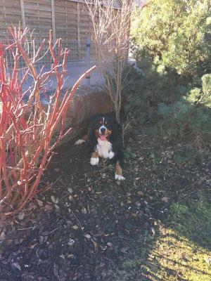 Ich helfe meinem Frauchen bei der Gartengestaltung ;-)
