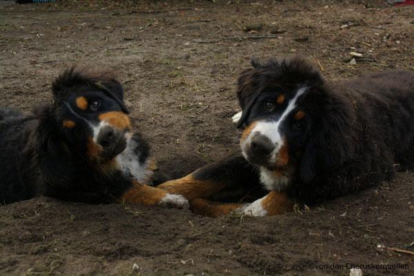 """Unschuldsbekundung! """"Das Loch war schon, wir haben nicht gebuddelt! """""""