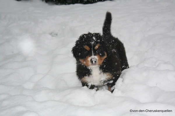 Aber Frauchen sagt, ich würde mit meinen kurzen Stelzen ja fast im Schnee versinken... die hat ja keine Ahnung!