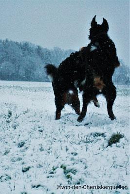 Mein allerbester Freund Odin und ich beim Spielen im Schnee :-)