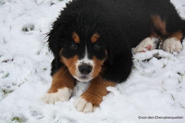 """Brrr, Zahnfrost - ziemlich kalt dieser """"Schnee"""""""