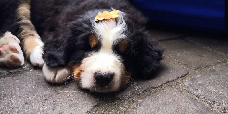 Belicia hat einen tiiieeefen Schlaf :-)