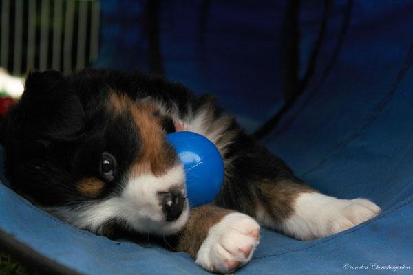 Spielen sollte einem Hundekind von vornherein ermöglicht werden.