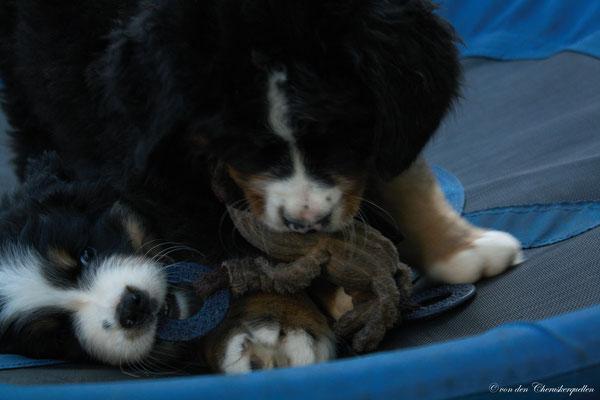 Ballantines - Mowgli gönnt seiner Schwester den Teddy nicht!