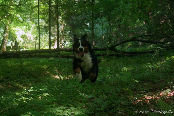 Toben in unserem Wald :-)