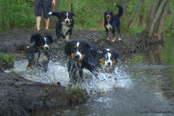 Wasserschlacht mit Athena, Anouk, Attila und anderen Hunden an meinem Badesee :-)