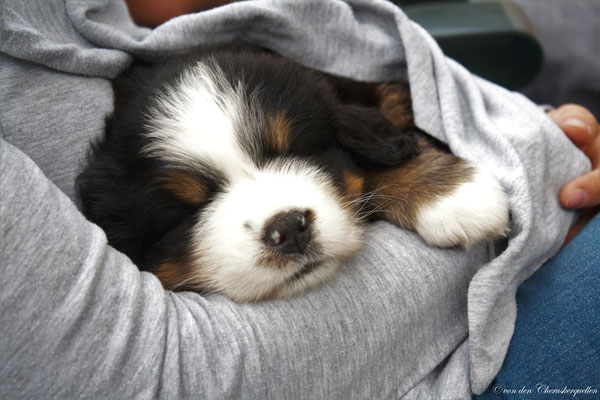Bei Frauchen im Arm schlafe ich am liebsten :-)