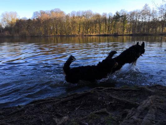 Mit Athena im Wasser toben - was gibt es besseres?