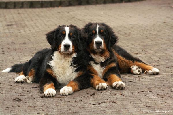 Mein Bruder Ballantines (rechts) und ich :-)